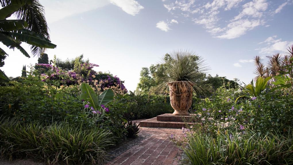 Dasylirion longissimum - Jardin botanique Val Rahmeh-Menton © MNHN - Agnès Iatzoura