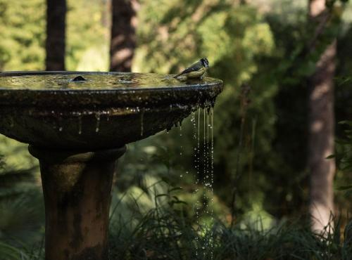 Jardin botanique Val Rahmeh-Menton© MNHN - Agnès Iatzoura